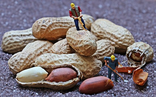 Photo of construction worker miniature figurines arranged to be performing roadwork on a pile of peanuts.